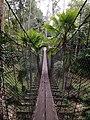 Shah Alam National Botanical Park, the hanging bridge.jpg