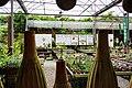 Shezi Flower Market 社子花市 - panoramio.jpg