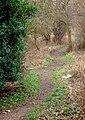 Smawthorne Swamps 2 - geograph.org.uk - 669918.jpg