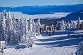 Snow covered trees atop Sun Peaks (15059780903).jpg