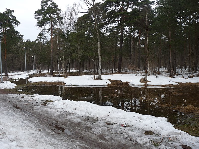 File:Snow melting in Pirita.JPG
