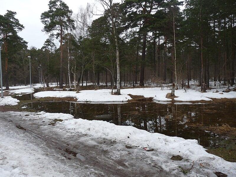 File:Snow melting in Pirita.JPG