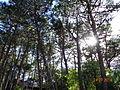 Sol entre las hojas.JPG