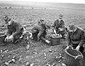 Soldaten helpen bij de aardappelenoogst op Goeree Overflakkee, Bestanddeelnr 911-7175.jpg