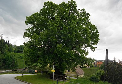 Sommer-Linde in Knappenberg, Ortsteil Gossen, Gemeinde Hüttenberg, Kärnten.jpg
