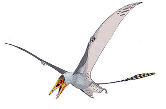 Pterosaur - Sordes, as depicted here, evidences the possibility that pterosaurs had a cruropatagium – a membrane connecting the legs that, unlike the chiropteran uropatagium, leaves the tail free.
