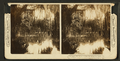 Spanish moss on the live oaks, from Robert N. Dennis collection of stereoscopic views.png