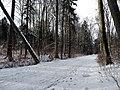Spaziergang im verscheiten Siebentischwald - panoramio (1).jpg
