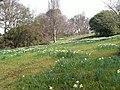 Spring arrives at Bodnant Garden - geograph.org.uk - 1800746.jpg