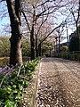 Spring of Kita-Shinagawa - panoramio (1).jpg