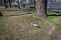Squirrel in Boston - panoramio.jpg