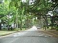 St Aug Nelmar Terrace street01.jpg