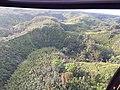 Starr-141014-2197-Caesalpinia decapetala-aerial view-Kakipi Gulch Haiku-Maui (25128939862).jpg