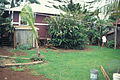 Starr 970503-0335 Pipturus albidus.jpg