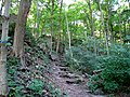 Steps - Niagara Glen Nature Reserve.jpg