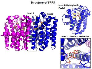 Geranyltranstransferase - Image: Structure of FPPS