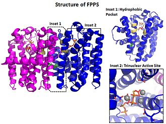 Geranyltranstransferase - Image: Structure of FPPS