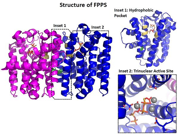 Crystal structure of FPPS (PDB ID: 1RQI)