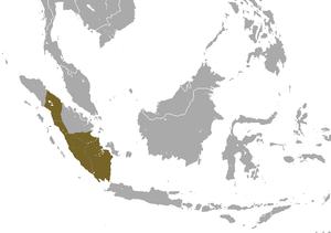 Sumatran surili - Image: Sumatran Surili area