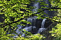 Summer at Dingmans Falls.jpg