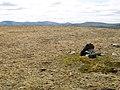 Summit, pt 906m, Carn an Fhidhleir - geograph.org.uk - 1367623.jpg
