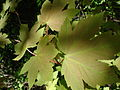 Sun and leaves2.jpg