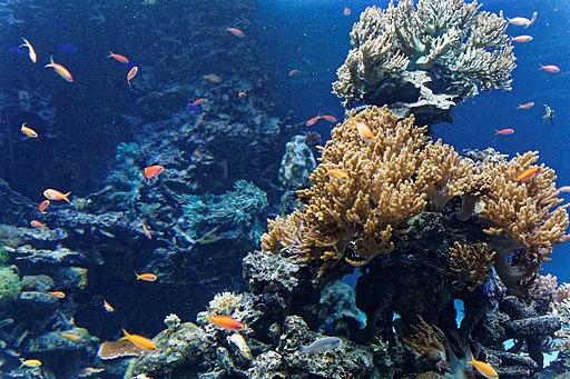 Sunshine Aquarium 3-22 (26288817652)