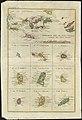 Supplement pour les Isles Antilles, extrait des carte Angloises (4586547385).jpg