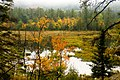 Swamp (1538964481).jpg