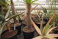 TU Delft Botanical Gardens 76.jpg