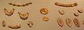 Taranto, gioielli del 230-210 ac ca. 10.JPG