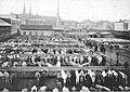 Targ bydła na Pradze 1912.jpg