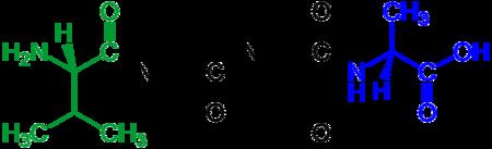 external image 450px-Tetrapeptide_structural_formulae_v.1.png