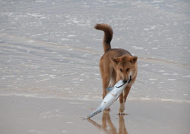 Image Result For Good Behavior Dog