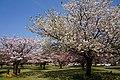 The Flower Association of Japan 1.jpg