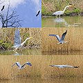 The Heron came and disappeared at the Warnsborn pond - panoramio.jpg