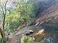 The Secret Beauty of Nature in Srilanka 06FD4A9F-8E95-4376-A609-6D60D4F85FBF.jpg