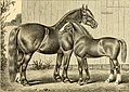 The breeds of live stock, and the principles of heredity (1887) (14594438030).jpg