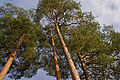 The four pines on the top (6250806133).jpg