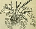 The orchid-grower's manual - containing descriptions of the best species and varieties of orchidaceous plants (1885) (14584102020).jpg