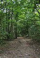 The valley woods - geograph.org.uk - 1519855.jpg