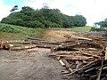 Timber yard on Green Lane, and Winnowing Close Plantation - geograph.org.uk - 211266.jpg