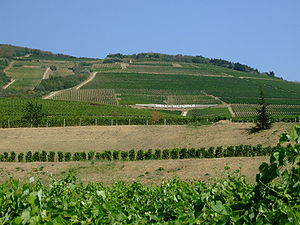 Hungarian wine - A Tokaji vineyard.