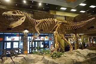 <i>Torvosaurus</i> genus of reptiles (fossil)