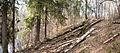 Tourula forest.jpg