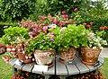 Trädgård till nytta och nöje 2012 pt 07.jpg