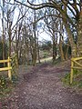 Track through woodland - geograph.org.uk - 1776342.jpg