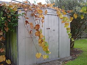 Shed - A metal garden shed made with sheets of galvanized steel over a steel frame