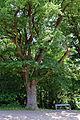Traisen - Naturdenkmal LF-080 - Eichenbaumgruppe - 5.jpg