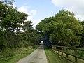 Tree-lined lane, Newton West - geograph.org.uk - 2592286.jpg